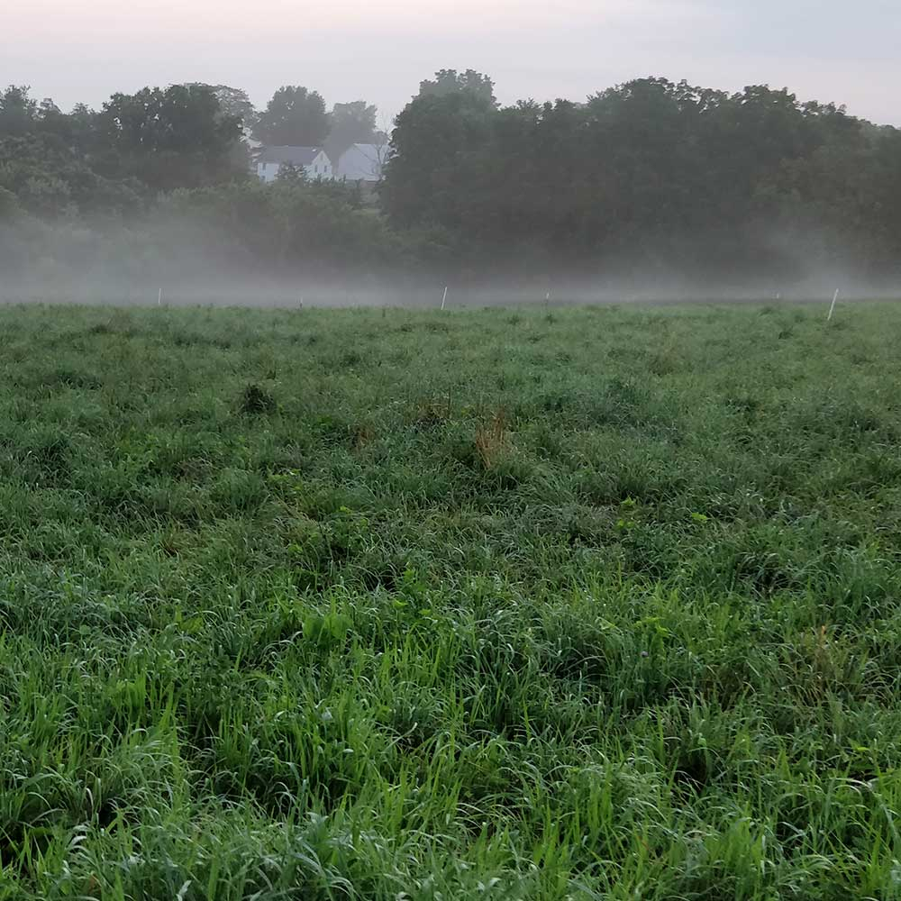 12 Reasons to Choose Perennial Pasture Based Agriculture